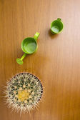 Styling care cactus — Fotografia Stock