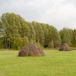 Haystacks on a meadow — Stock Photo #54766593