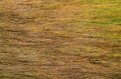 Background of long wet yellow grass texture — Stock Photo