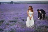 Wedding lavender field. — Stock Photo