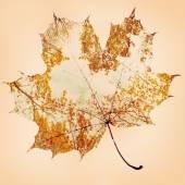Outono folha de plátano — Fotografia Stock