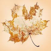 Sonbaharda akçaağaç yaprağı — Stok fotoğraf
