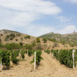 Vineyards at bottom of mountain — Stock Photo #65175249