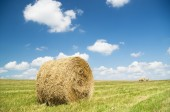 Bales of hay in a large field. — Stock Photo
