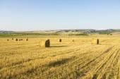 Fardos de feno em um campo grande. — Foto Stock