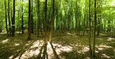 Deep forest — Stockfoto