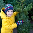 Christmas tree shopping — Stock Photo #52574233