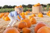 Kid at pumpkin patch — Stock Photo