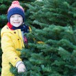 Christmas tree shopping — Stock Photo #71536343