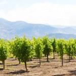 Wine country — Stock Photo #73684447