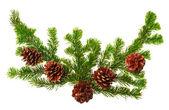 Vánoční dekorace, samostatný — Stock fotografie