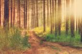 Zachód słońca w lesie jesienią — Zdjęcie stockowe
