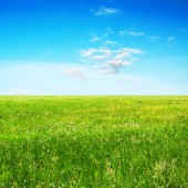 Sky and summer field — Stock Photo