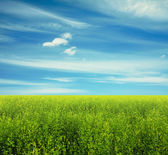Sky and summer field — Stok fotoğraf