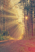 Sunrise in the foggy forest — Stock Photo