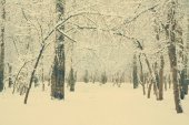 Woods covered with snow — Stock Photo