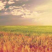 Sky and yellow rapeseed fiel — Stock Photo