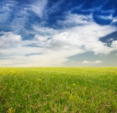 Beautiful sky and green fields — Stock Photo