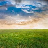 Sunset sky and green fields — Stock Photo