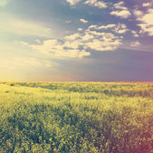 Sky and yellow rapeseed field — Stock Photo