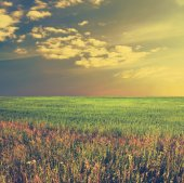Beautiful sky and summer fields — Stock Photo