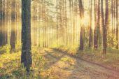 Beau coucher de soleil dans la Forêt brumeuse — Photo