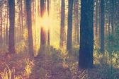 Piękny zachód słońca w lesie — Zdjęcie stockowe