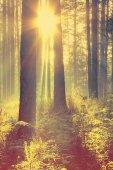 Hermosa puesta de sol en el bosque — Foto de Stock