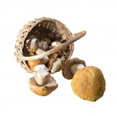 Overturned basket with mushrooms — Stock Photo
