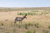 Antelope Island State Park — Stock Photo