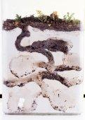 муравьи ферма — Стоковое фото