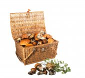 Braided Treasure Chest - mushrooms boletus. — Stok fotoğraf