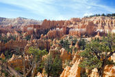 National Park Bryce Canyon — Stock Photo