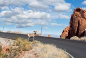 Bighorn sheep  on the road — Stock Photo