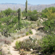 Saguaro National Park — Stock Photo #71175791