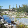 Intermittent stream in Sonoran Desert. — Stock Photo #71175851