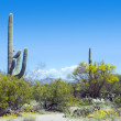 Saguaro National Park — Stock Photo #71175943