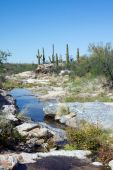 Intermittent stream in Sonoran Desert. — Stock Photo