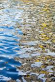 Polluted water and scum — Stock Photo