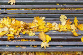 Bench in autumn park with fallen leaves — Stock Photo