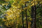 Autumn park landscape — Stock Photo