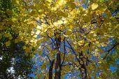 Nice trees in autumn — Stock Photo