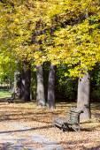 Park bench in autumn season — Stock Photo