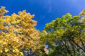 Beautiful colors of autumn landscape — Stock Photo
