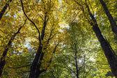 Sunny autumn forest — Stock Photo