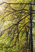 Trees in autumn — Stock Photo