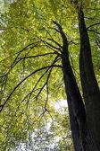 Beautiful autumn trees — Stock Photo