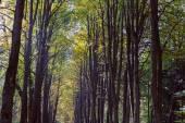 Beech tree in a park — Zdjęcie stockowe