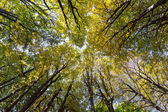 Top of autumn trees in forest — Stock Photo