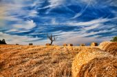 Field after harvest and dramatic sky — Stock Photo